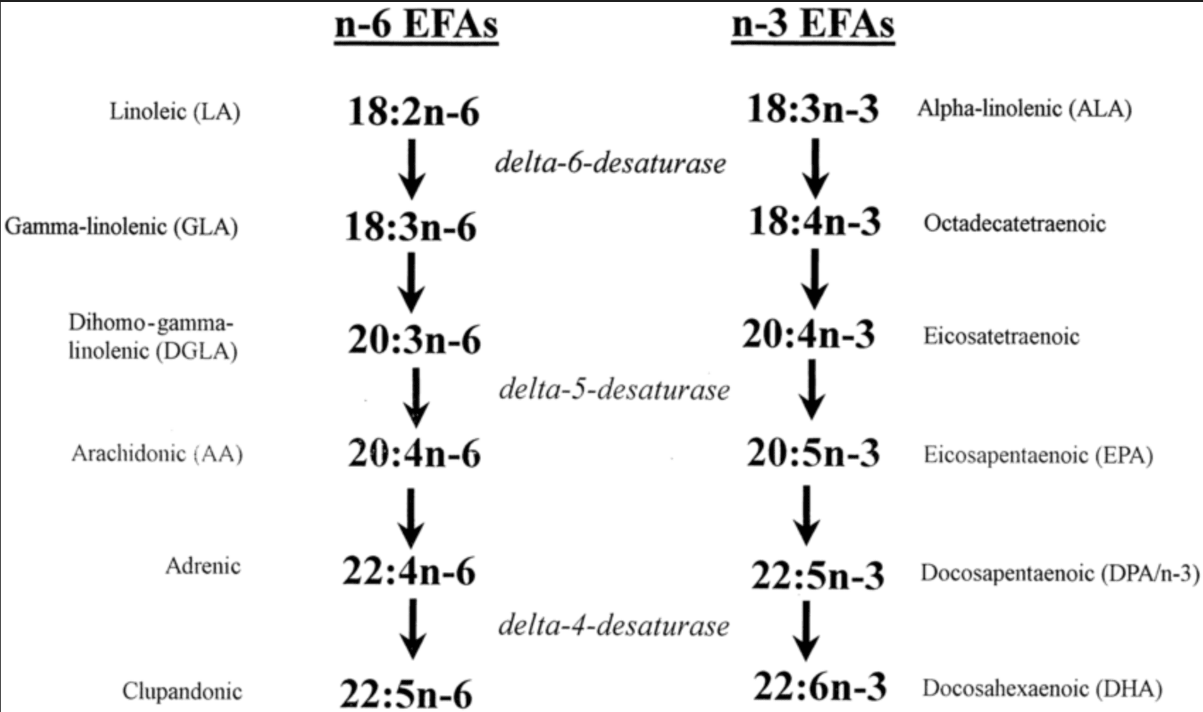 Metabolism ALA and LA