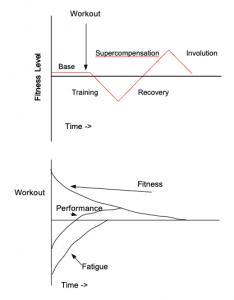 Supercompensation vs. Fitness-Fatigue