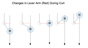 Changes in Lever Arm During Biceps Curl